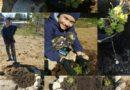 1 июня прошла первая заочная экологическая акция «Зеленый двор».